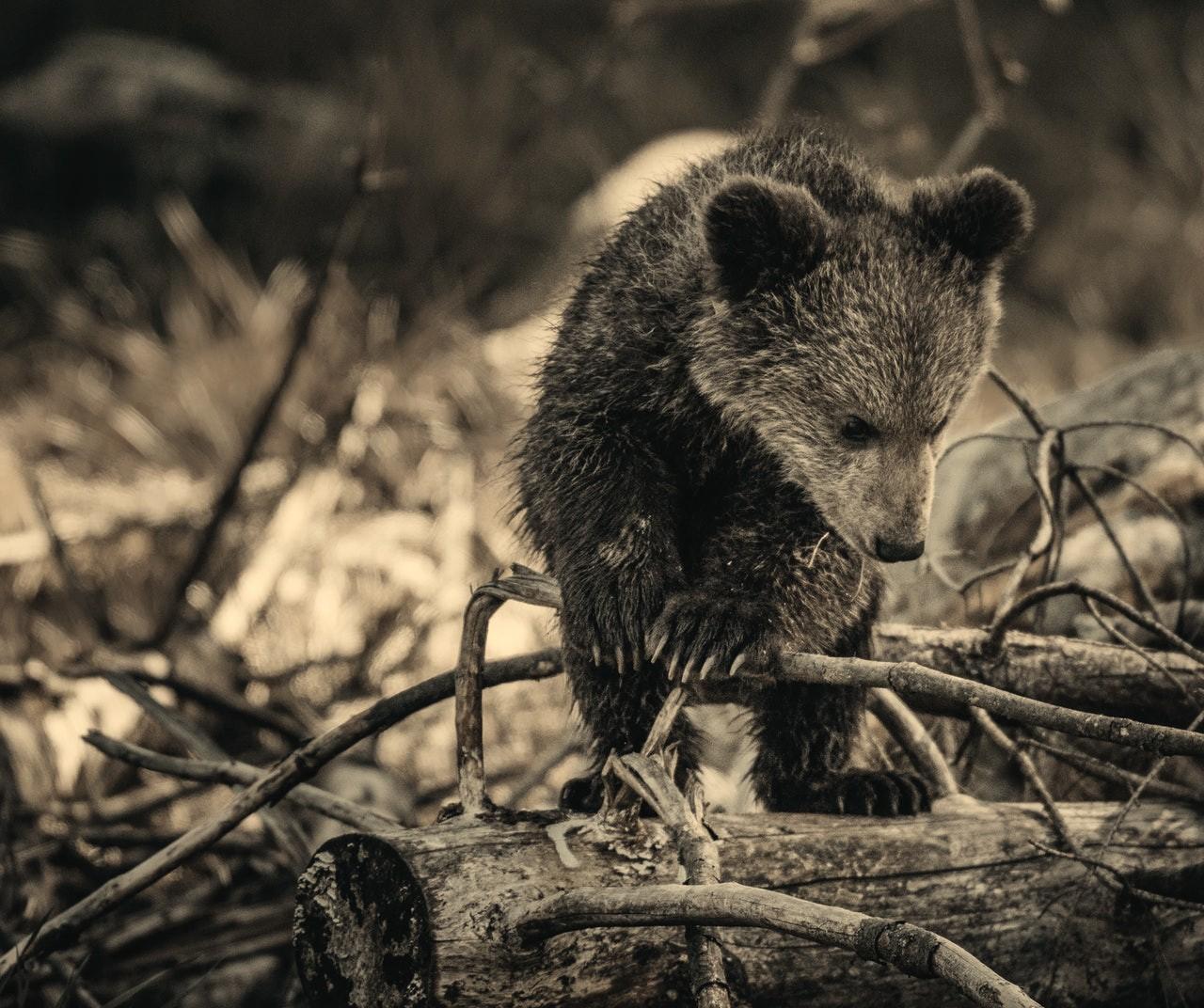Cattura di animali selvatici: cosa si rischia?